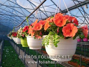 Növényház